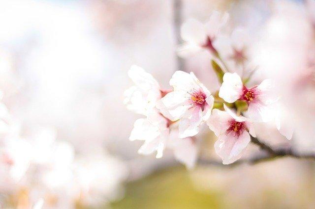 spring-2497200_640.jpg